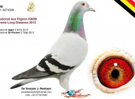 NEW GENE DOPAMINE RECEPTOR TYPE 4 (DRD4) HAS SCIENTIFIC PROVEN INFLUENCE ON THE RACING PERFORMANCE OF PIGEONS