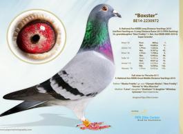 Boxster van het PIPA Elite Center bezit het heel unieke LDHA AA DRD4 CCCT genotype !
