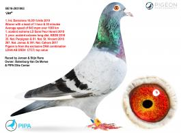 GENE DOPAMINE RECEPTOR TYPE 4 (DRD4) HAS SCIENTIFIC PROVEN INFLUENCE ON THE RACING PERFORMANCE OF PIGEONS